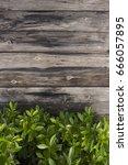 wood floor and green leaf   Shutterstock . vector #666057895