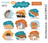 hamster breeds icon set flat... | Shutterstock .eps vector #666158932
