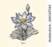 Beautiful Lotus Flower With A...