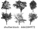 collection of isolated tree ob... | Shutterstock . vector #666184972