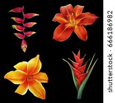 Flowers Of Tropical Garden On...