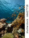 fish. coral and ocean. | Shutterstock . vector #66627718