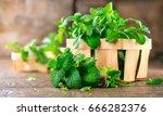 mint. bunch of fresh green... | Shutterstock . vector #666282376