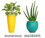 3d digital render of plant... | Shutterstock . vector #666283405