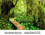boardwalk trail through the... | Shutterstock . vector #666364132