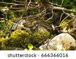 Brown Snake In The Sun Under...