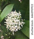 flower | Shutterstock . vector #666393922