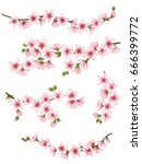 bloom branch with pink flowers  ... | Shutterstock .eps vector #666399772