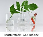 natural organic botany and... | Shutterstock . vector #666406522