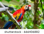 colorful scarlet macaw parrot... | Shutterstock . vector #666406882