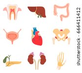 human organs color icons set... | Shutterstock .eps vector #666411412