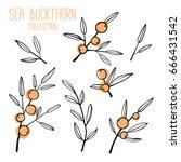 set of sea buckthorn branch....   Shutterstock .eps vector #666431542
