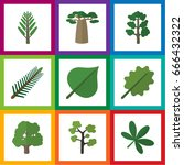 flat icon nature set of hickory ... | Shutterstock .eps vector #666432322