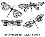 dragonflies | Shutterstock .eps vector #666454996