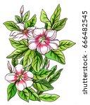 white pink catharanthus... | Shutterstock . vector #666482545