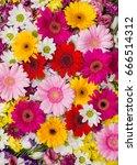 gerbera and other flowers... | Shutterstock . vector #666514312