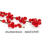 Winterberry Christmas Branches...