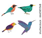 tropical birds set. exotic... | Shutterstock .eps vector #666585568