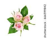 beautiful white rose flowers... | Shutterstock . vector #666599842