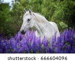 arabian horse among blooming...   Shutterstock . vector #666604096