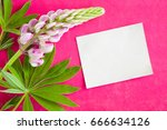 lupine flower with green leaves ... | Shutterstock . vector #666634126