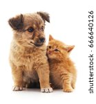 Stock photo kitten and puppy isolated on a white background 666640126