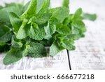 mint. bunch of fresh green... | Shutterstock . vector #666677218