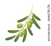 olive branch.olives single icon ... | Shutterstock . vector #666678178