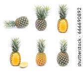 ripe pineapples isolated on ... | Shutterstock . vector #666690892