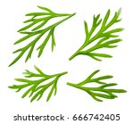 Dill. Fresh Dill Collection...