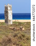donkeys near the beach in morro ... | Shutterstock . vector #666772372