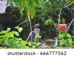 House Sparrows.and Flowers....