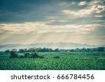green vegetable with sunlight... | Shutterstock . vector #666784456