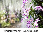 fake orchids | Shutterstock . vector #666803185
