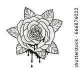 rose flower monochrome vector... | Shutterstock .eps vector #666876022