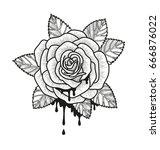 rose flower monochrome vector... | Shutterstock .eps vector #666876022