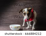 dog eats from a plate. jack... | Shutterstock . vector #666884212