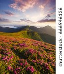 flowers in the mountains during ... | Shutterstock . vector #666946126