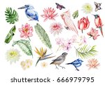 watercolor set with tropical... | Shutterstock . vector #666979795