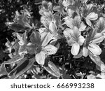 black and white moody contrast... | Shutterstock . vector #666993238