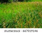 weeds waving in the wind | Shutterstock . vector #667019146