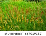 weeds waving in the wind | Shutterstock . vector #667019152