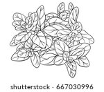 adult coloring page book a... | Shutterstock .eps vector #667030996
