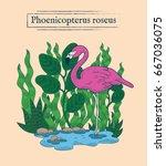 Vector Illustration Flamingo....