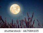 beautiful autumn fantasy   wild ... | Shutterstock . vector #667084105