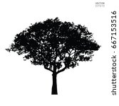 silhouette tree isolated on... | Shutterstock .eps vector #667153516