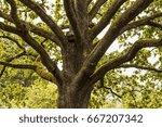 the bird feeder on the tree | Shutterstock . vector #667207342