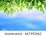 green leaves and blue sky... | Shutterstock . vector #667292062