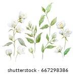 watercolor set of jasmine... | Shutterstock . vector #667298386