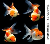 collage of 4 gold fish isolated ... | Shutterstock . vector #667306948
